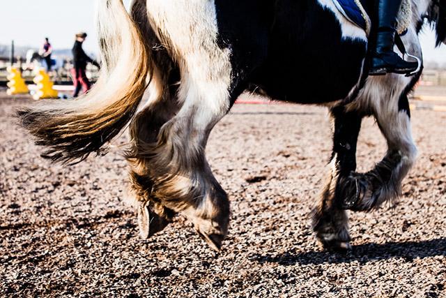 konie na sterydach w Anglii