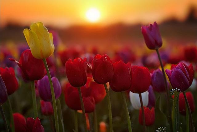 swieto kwiatow w spalding