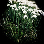 kwiaty w peterborough
