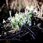 Peterborough wiosną