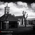 Polskie Peterborough
