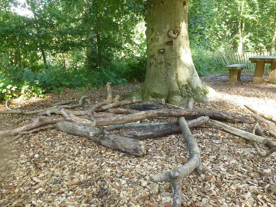 las Fineshade Wood
